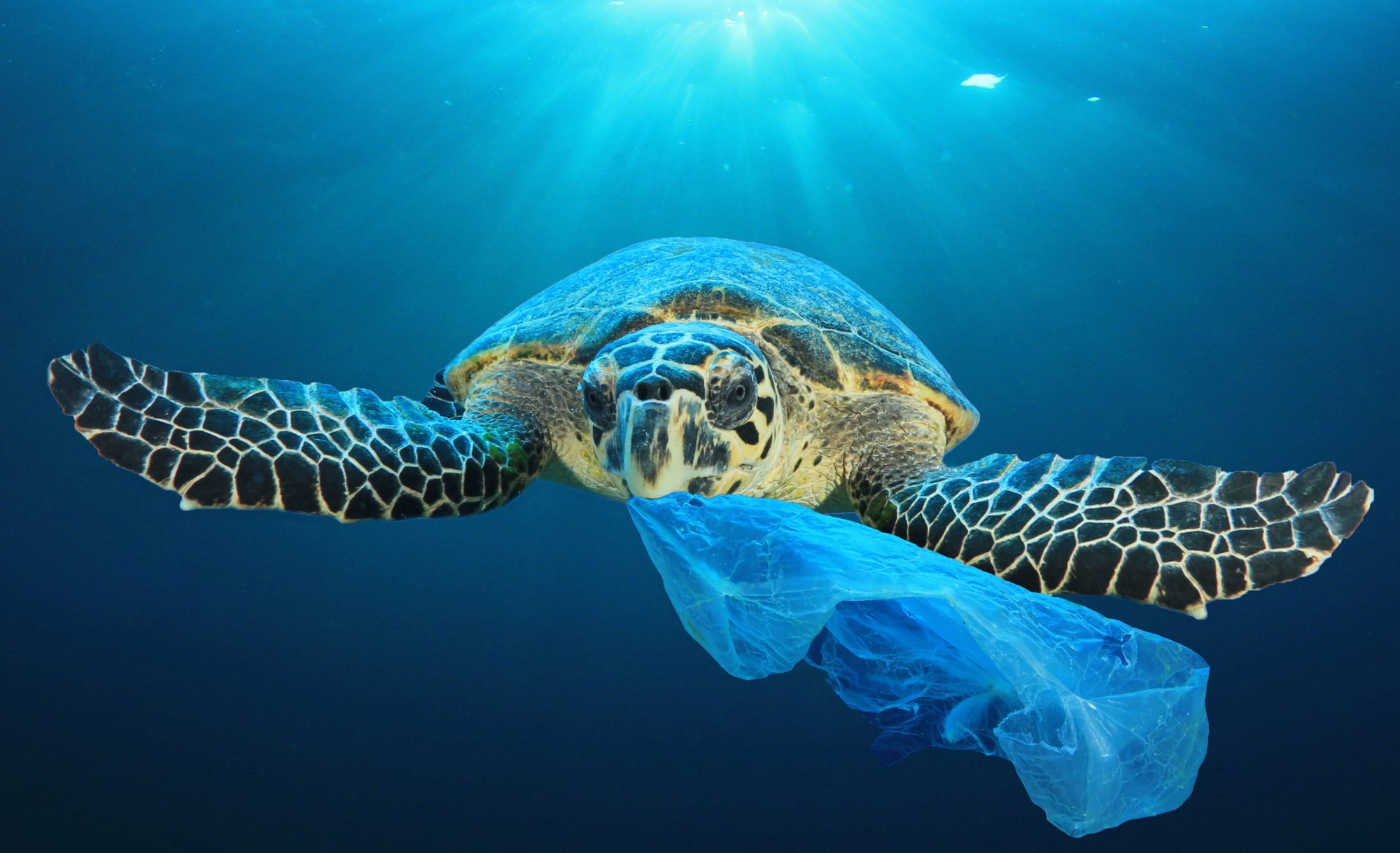 Because Turtles Eat Plastic Bags